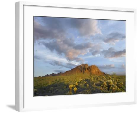 Kofa Mountain and Cholla Cactus at Sunset, Kofa National Wildlife Refuge, Arizona-Tim Fitzharris-Framed Art Print