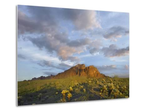Kofa Mountain and Cholla Cactus at Sunset, Kofa National Wildlife Refuge, Arizona-Tim Fitzharris-Metal Print