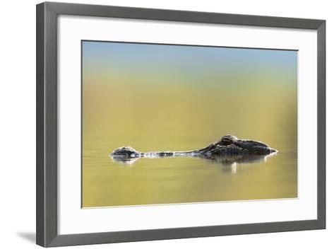 American Alligator, Florida, Usa-Tim Fitzharris-Framed Art Print