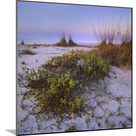 Bowman's Beach, Sanibel Island, Florida, Usa-Tim Fitzharris-Mounted Photographic Print