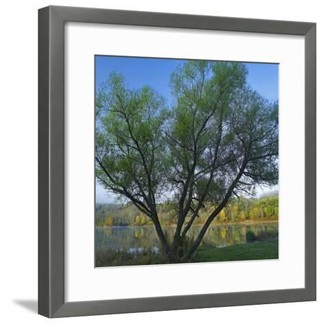 Willow Tree at Lackawanna Lake in Autumn, Lackawanna State Park, Pennsylvania, Usa-Tim Fitzharris-Framed Art Print