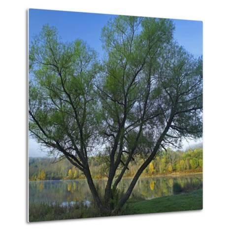 Willow Tree at Lackawanna Lake in Autumn, Lackawanna State Park, Pennsylvania, Usa-Tim Fitzharris-Metal Print