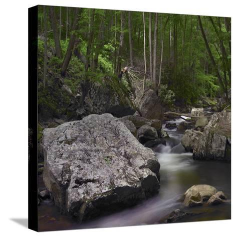 Little Stony Creek, Jefferson National Forest, Virginia-Tim Fitzharris-Stretched Canvas Print