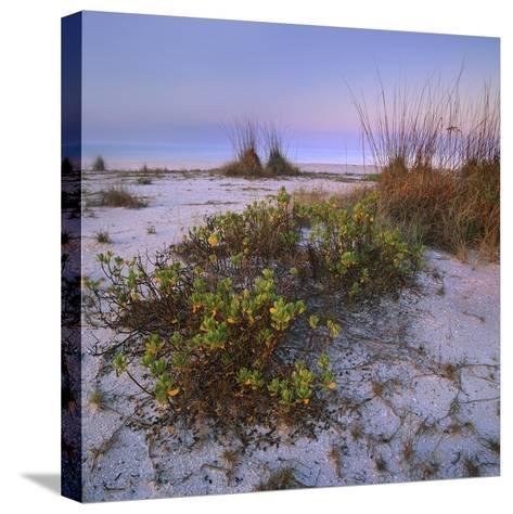 Bowman's Beach, Sanibel Island, Florida, Usa-Tim Fitzharris-Stretched Canvas Print