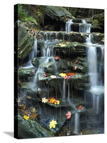 Maple Leaves on Rock of Small Falls on Kitchen Creek, Ricketts Glen State Park, Pennsylvania, Usa-Tim Fitzharris-Stretched Canvas Print