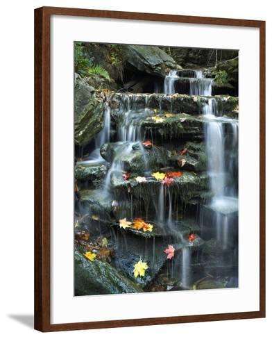 Maple Leaves on Rock of Small Falls on Kitchen Creek, Ricketts Glen State Park, Pennsylvania, Usa-Tim Fitzharris-Framed Art Print