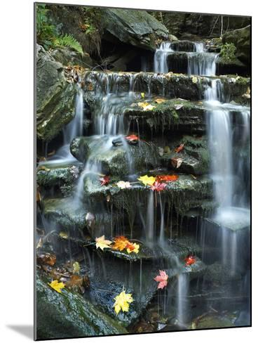 Maple Leaves on Rock of Small Falls on Kitchen Creek, Ricketts Glen State Park, Pennsylvania, Usa-Tim Fitzharris-Mounted Photographic Print