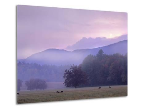 White-Tailed Deer at Cades Cove, Great Smoky Mountains National Park, Tennessee, Usa-Tim Fitzharris-Metal Print