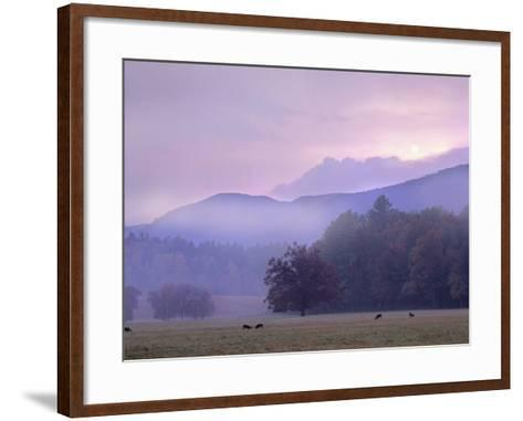 White-Tailed Deer at Cades Cove, Great Smoky Mountains National Park, Tennessee, Usa-Tim Fitzharris-Framed Art Print