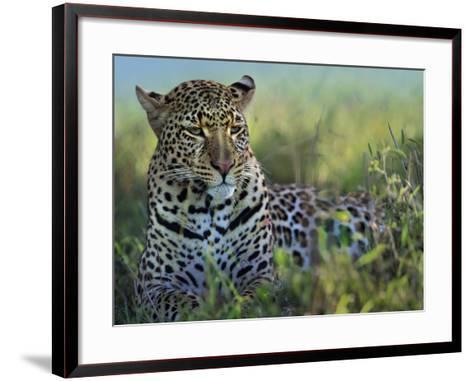 Leopard Resting after Eating, Kenya, Africa-Tim Fitzharris-Framed Art Print