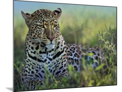 Leopard Resting after Eating, Kenya, Africa-Tim Fitzharris-Mounted Photographic Print