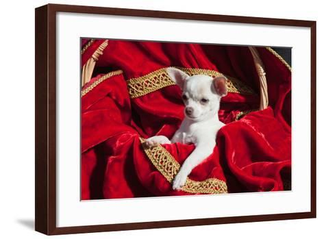Chihuahua Puppy Surrounded in Red and Gold-Zandria Muench Beraldo-Framed Art Print
