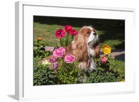 Cavalier Sitting in a Flowerbed-Zandria Muench Beraldo-Framed Art Print