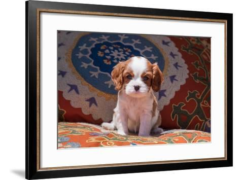 Cavalier King Charles Spaniel Puppy-Zandria Muench Beraldo-Framed Art Print