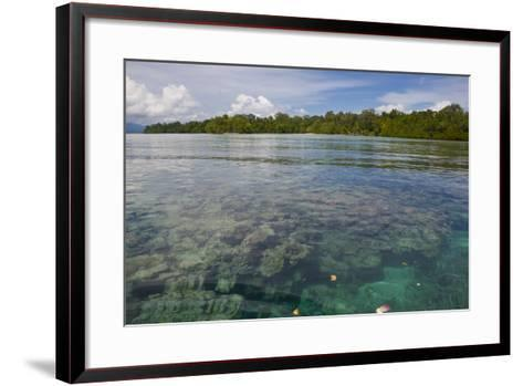 Giant Clams in the Clear Waters of the Marovo Lagoon, Solomon Islands, Pacific-Michael Runkel-Framed Art Print