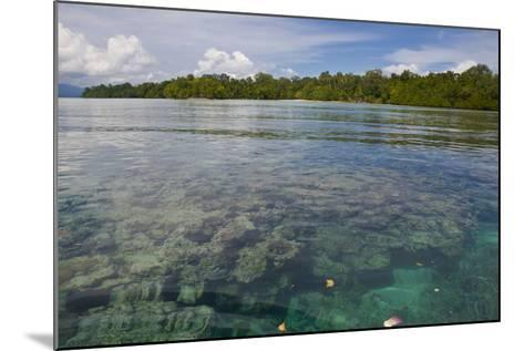 Giant Clams in the Clear Waters of the Marovo Lagoon, Solomon Islands, Pacific-Michael Runkel-Mounted Photographic Print