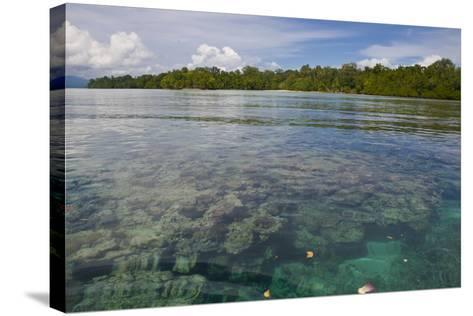 Giant Clams in the Clear Waters of the Marovo Lagoon, Solomon Islands, Pacific-Michael Runkel-Stretched Canvas Print