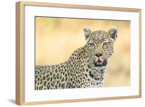 Botswana. Okavango Delta. Khwai Concession. Leopard Looks Out for Prey-Inger Hogstrom-Framed Art Print
