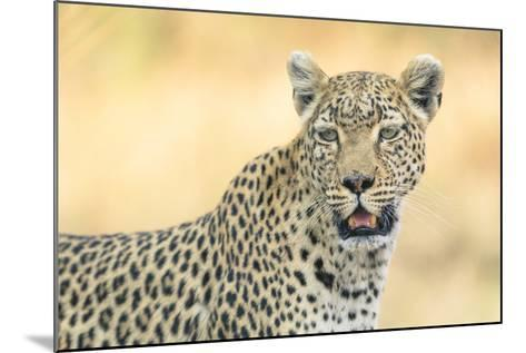 Botswana. Okavango Delta. Khwai Concession. Leopard Looks Out for Prey-Inger Hogstrom-Mounted Photographic Print