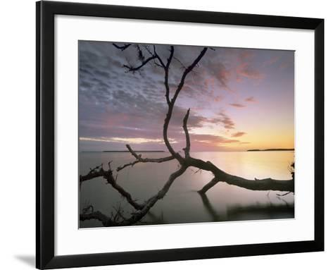 Flamingo Bay, Everglades National Park, Florida, Usa-Tim Fitzharris-Framed Art Print