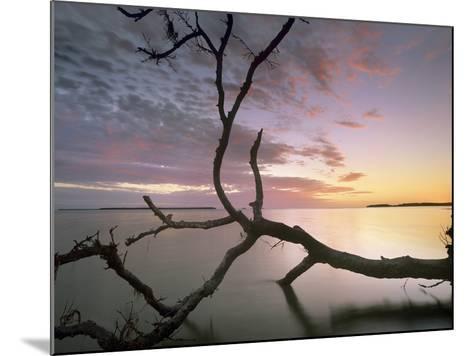 Flamingo Bay, Everglades National Park, Florida, Usa-Tim Fitzharris-Mounted Photographic Print