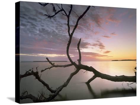 Flamingo Bay, Everglades National Park, Florida, Usa-Tim Fitzharris-Stretched Canvas Print