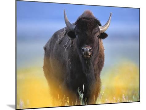 Bison, Wyoming, Usa-Tim Fitzharris-Mounted Photographic Print