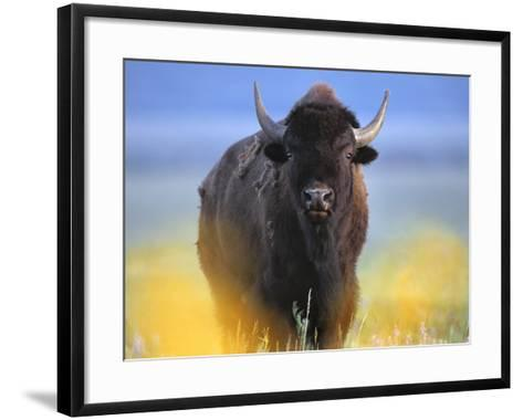 Bison, Wyoming, Usa-Tim Fitzharris-Framed Art Print