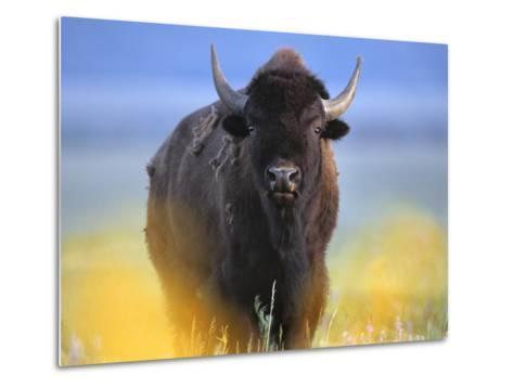 Bison, Wyoming, Usa-Tim Fitzharris-Metal Print