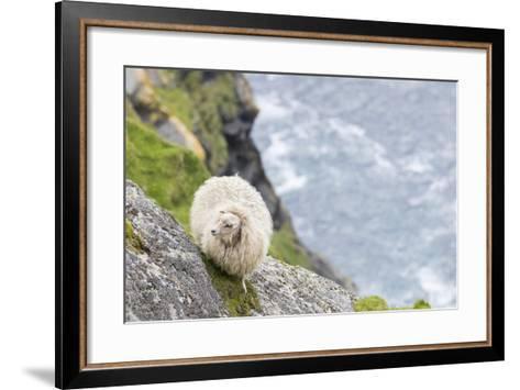 Shetland Sheep at the Cliffs of the Hermaness Nature Reserve, Unst, Shetland Islands, Scotland-Martin Zwick-Framed Art Print