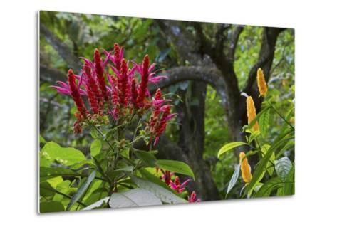 Forest Blooms, Asa Wright Natural Area, Trinidad-Ken Archer-Metal Print