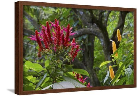 Forest Blooms, Asa Wright Natural Area, Trinidad-Ken Archer-Framed Art Print