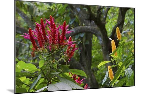 Forest Blooms, Asa Wright Natural Area, Trinidad-Ken Archer-Mounted Photographic Print