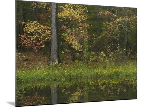 Autumn Color at Millwood Lake State Park, Arkansas, Usa-Tim Fitzharris-Mounted Photographic Print