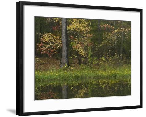 Autumn Color at Millwood Lake State Park, Arkansas, Usa-Tim Fitzharris-Framed Art Print