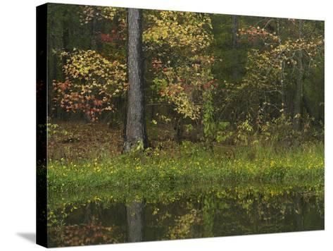 Autumn Color at Millwood Lake State Park, Arkansas, Usa-Tim Fitzharris-Stretched Canvas Print