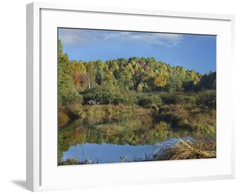 Fall Foliage at Rakes Mill Pond, Blue Ridge Parkway, Virginia-Tim Fitzharris-Framed Art Print