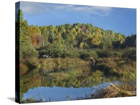 Fall Foliage at Rakes Mill Pond, Blue Ridge Parkway, Virginia-Tim Fitzharris-Stretched Canvas Print