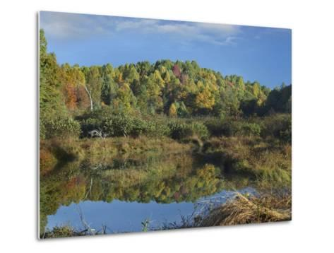 Fall Foliage at Rakes Mill Pond, Blue Ridge Parkway, Virginia-Tim Fitzharris-Metal Print