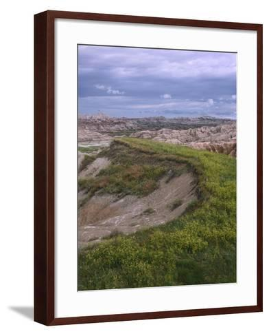 Wildflower Cling to a Ridge in Badlands National Park, South Dakota-Tim Fitzharris-Framed Art Print