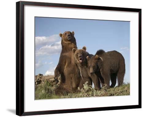 Grizzly Bear Sitting with Her Cubs, Montana, Usa-Tim Fitzharris-Framed Art Print
