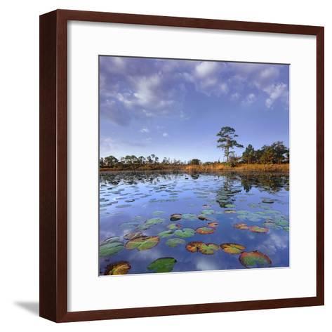 Pond Lilies, Jonathan Dickinson State Park, Florida, Usa-Tim Fitzharris-Framed Art Print