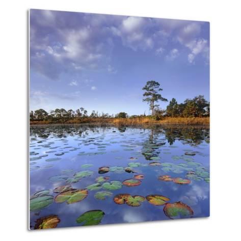 Pond Lilies, Jonathan Dickinson State Park, Florida, Usa-Tim Fitzharris-Metal Print