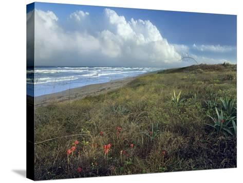 Storm Clouds at Apollo Beach, Canaveral National Seashore, Florida, Usa-Tim Fitzharris-Stretched Canvas Print