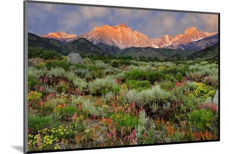 California, Sierra Nevada Mountains. Wildflowers Bloom in Valley-Jaynes Gallery-Mounted Photographic Print