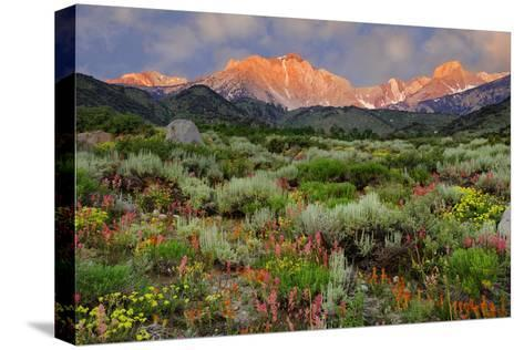 California, Sierra Nevada Mountains. Wildflowers Bloom in Valley-Jaynes Gallery-Stretched Canvas Print