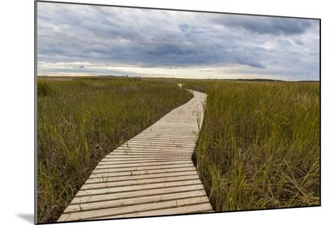 The Boardwalk Through the Tidal Marsh at Mass Audubon's Wellfleet Bay Wildlife Sanctuary-Jerry and Marcy Monkman-Mounted Photographic Print