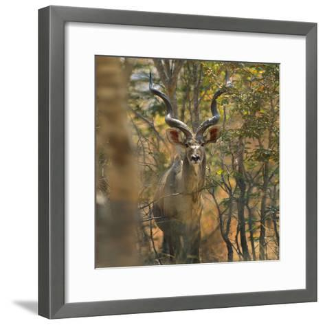 Greater Kudu , Kenya, Africa-Tim Fitzharris-Framed Art Print