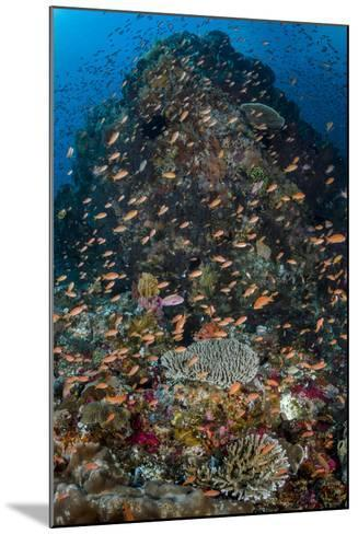 Indonesia, Alor Island. Coral Reef Scenic-Jaynes Gallery-Mounted Photographic Print