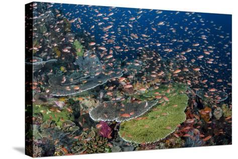 Indonesia, Alor Island. Coral Reef Scenic-Jaynes Gallery-Stretched Canvas Print